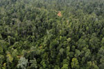 Selectively logged forest in Borneo -- sabah_aerial_2339