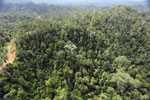 Selectively logged forest in Borneo -- sabah_aerial_2340