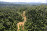 Logging road in Borneo -- sabah_aerial_2343
