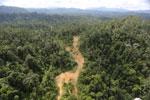 Logging road in Borneo -- sabah_aerial_2344