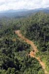 Logging road in Borneo -- sabah_aerial_2345