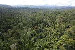 Orange flowering tree amid the rainforest in Borneo -- sabah_aerial_2351