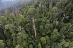 Borneo rainforest -- sabah_aerial_2355