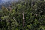 Borneo rainforest -- sabah_aerial_2356