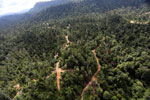 Active logging concession in Borneo -- sabah_aerial_2358
