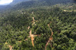 Active logging zone in Borneo