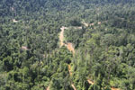 Active logging area in Borneo -- sabah_aerial_2364