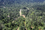 Active logging concession in Borneo -- sabah_aerial_2365