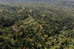 Active logging concession in Borneo
