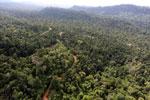 Active logging zone in Borneo -- sabah_aerial_2383