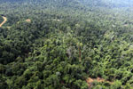 Active logging area in Borneo