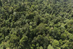 Borneo rainforest -- sabah_aerial_2385