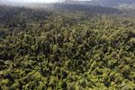 Borneo rainforest -- sabah_aerial_2386