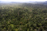 Logged forest in Borneo -- sabah_aerial_2387