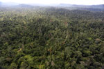 Logged forest in Borneo -- sabah_aerial_2388