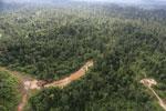 Logging road -- sabah_aerial_2389
