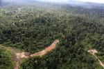 Logging road -- sabah_aerial_2390