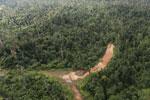 Logging road -- sabah_aerial_2391