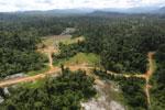 Logging road -- sabah_aerial_2395