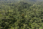 Logged forest in Borneo -- sabah_aerial_2404