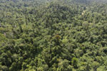 Logged forest in Borneo -- sabah_aerial_2405