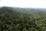 Borneo rainforest -- sabah_aerial_2408