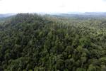 Borneo rainforest -- sabah_aerial_2410