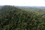 Borneo rainforest -- sabah_aerial_2411