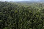 Borneo rainforest -- sabah_aerial_2412