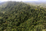 Borneo rainforest -- sabah_aerial_2413
