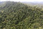 Borneo rainforest -- sabah_aerial_2415
