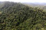 Borneo rainforest -- sabah_aerial_2416