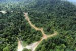 Logging road -- sabah_aerial_2419
