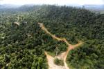 Logging road -- sabah_aerial_2420