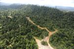 Logging road -- sabah_aerial_2421