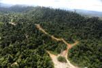 Logging road -- sabah_aerial_2422