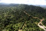Logging road -- sabah_aerial_2423