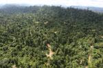 Logging road -- sabah_aerial_2425