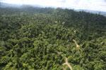 Logging road -- sabah_aerial_2426