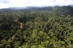 Logging road -- sabah_aerial_2427