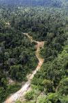 Logging road -- sabah_aerial_2429