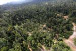 Logging road -- sabah_aerial_2430