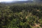 Logging road -- sabah_aerial_2431
