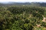 Logging road -- sabah_aerial_2432