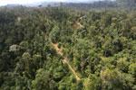 Logging road -- sabah_aerial_2434