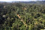Logging road -- sabah_aerial_2435