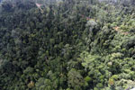 Logged forest in Borneo -- sabah_aerial_2436