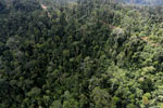 Logged forest in Borneo -- sabah_aerial_2437