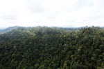 Logged forest in Borneo -- sabah_aerial_2438