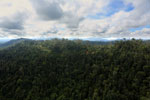 Logged forest in Borneo -- sabah_aerial_2439